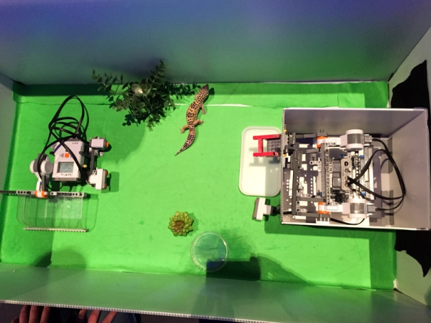 This machine feeds your pet lizard automatically if you're out of town.